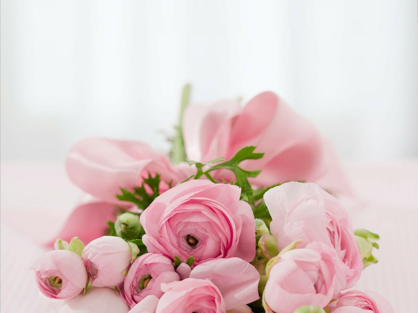 Drugi post - czyż te kwiaty nie są piękne?