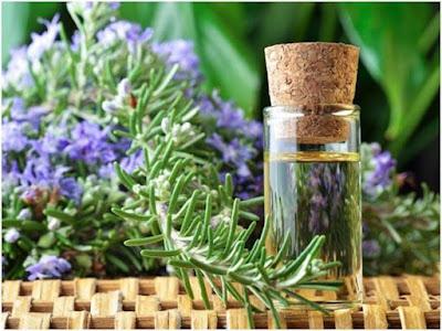 tinh dầu hoa hương thảo giúp phục hồi tóc