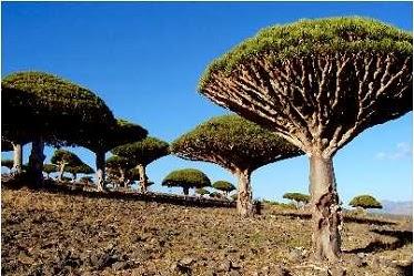 http://plecinlume.blogspot.de/search/label/Socotra