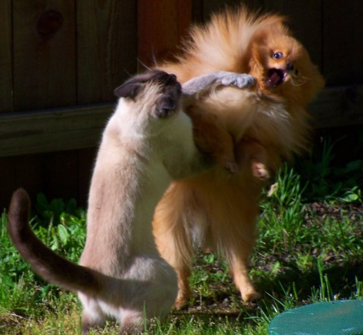 Funny Two Cats Fighting