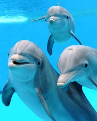 Διαμαρτύρονται για τα... δελφίνια.