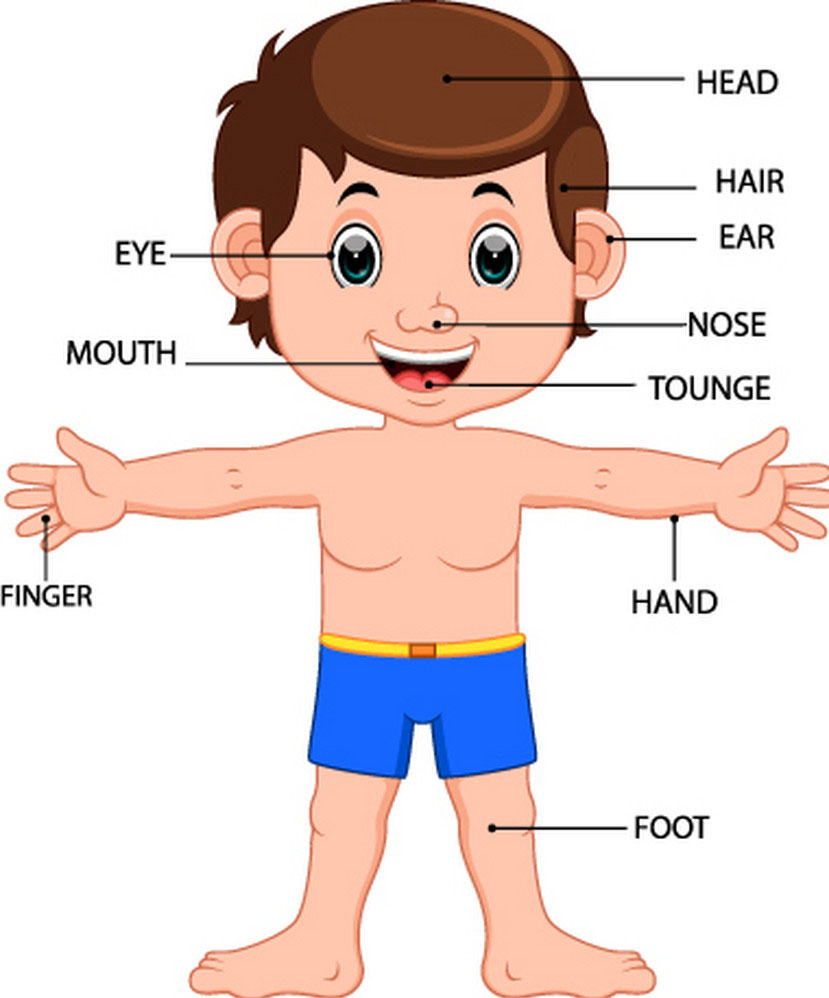 Parts Of Body Vocabularies Mediainggris