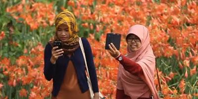 http://regional.kompas.com/read/2015/11/27/20213321/Ini.Kebun.Bunga.Amaryllis.yang.Sedang.Jadi.Pembicaraan