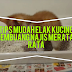 Tips Mudah Elak Kucing Membuang Najis Merata-rata