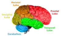 5 Parts of Human Brain