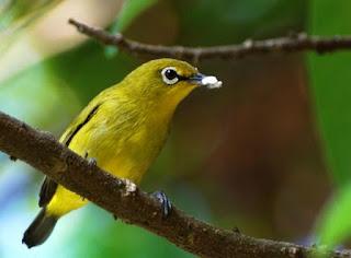 Khasiat/Manpaat Dan Harga Obat Mencret Burung Saat Ini Paling Baru