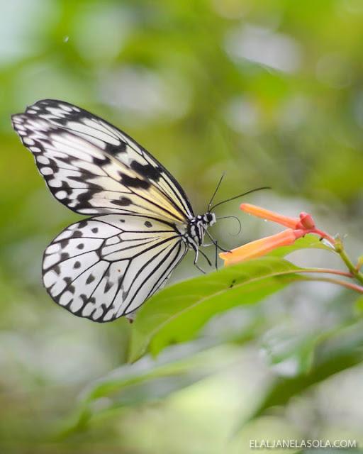 Rizal | Timberland Adventure Park