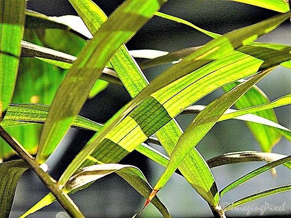 Digital Moments, Colors of DMC-FZ18 #II 03