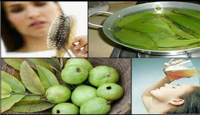 Manfaat Daun Jambu Untuk Mengatasi Segala Macam Masalah Rambut