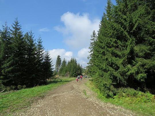 Droga przez gorczańskie polany.