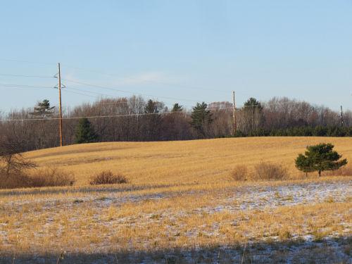 golden winter fields