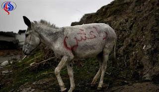 مدونة العراق : حمار يفجر ثلاثة من عناصر داعش  في العراق! - a donkey explodes three elements of a supporter in Iraq