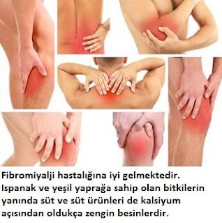 Fibromiyalji Bitkisel Tedavi