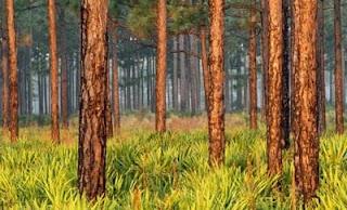 Misteri Pohon Angker