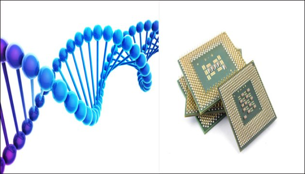 Human_DNA_to_Help_Create_Faster_Cheaper_Chips_Soon_Technologic-World