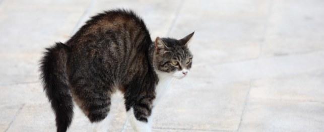 20 Gambar Kucing Lucu Sedang Marah Foto Kucing Terbaru