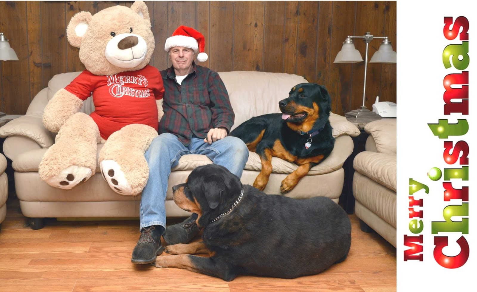 Living with Rottweilers: 2017