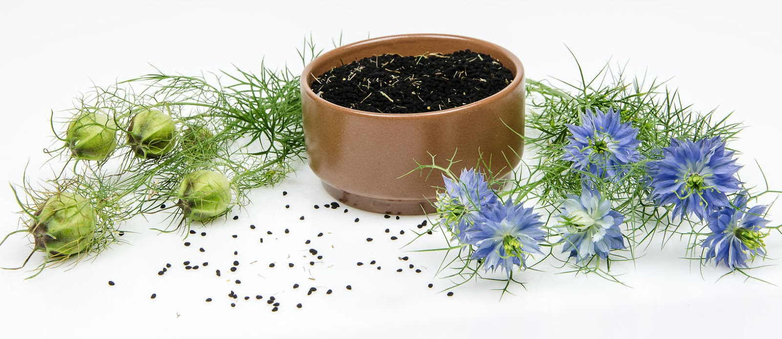 nigella sativa research papers Search for more papers by assessment of protective potential of nigella sativa oil against carbendazim environmental science and pollution research.