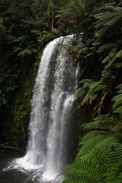 Beauchamp Falls, Beech Forest
