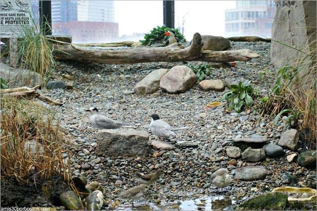 Aves en la Recreación de la Costa de las Islas de Boston del Acuario