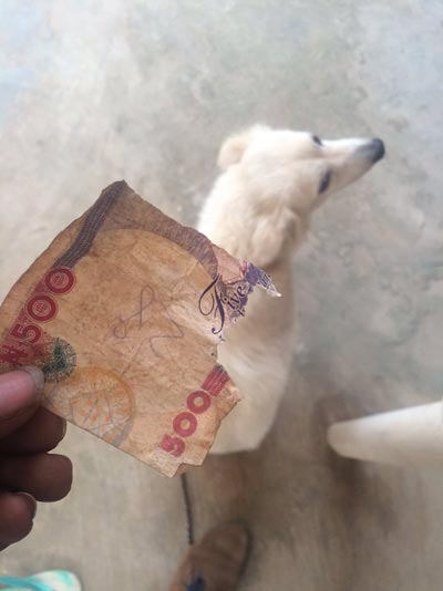 For Eating His Money, See What This Guy Did To His Dog