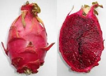manfaat buah naga,buah naga,manfaat buah naga merah untuk diet,manfaat buah naga merah,manfaat buah naga merah untuk kecantikan,manfaat buah naga merah untuk bayi,buah naga merah,khasiat buah naga,manfaat jus buah naga merah untuk diet,manfaat buah,manfaat buah naga bagi kesehatan,manfaat buah naga untuk diet,manfaat buah naga untuk kecantikan,manfaat buah naga merah untuk kesehatan