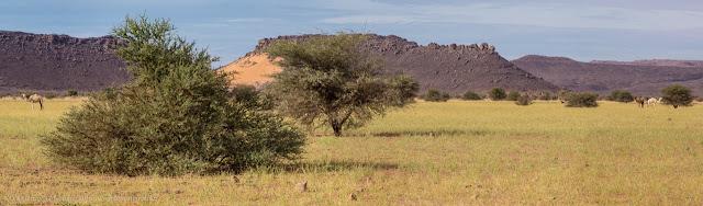 Il paradiso dei cammelli