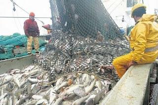 Como protesta, empresarios regalarán pescado en el puerto de Mar del Plata