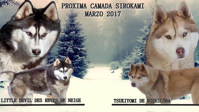 PROXIMA CAMADA TSUKI-KURKO