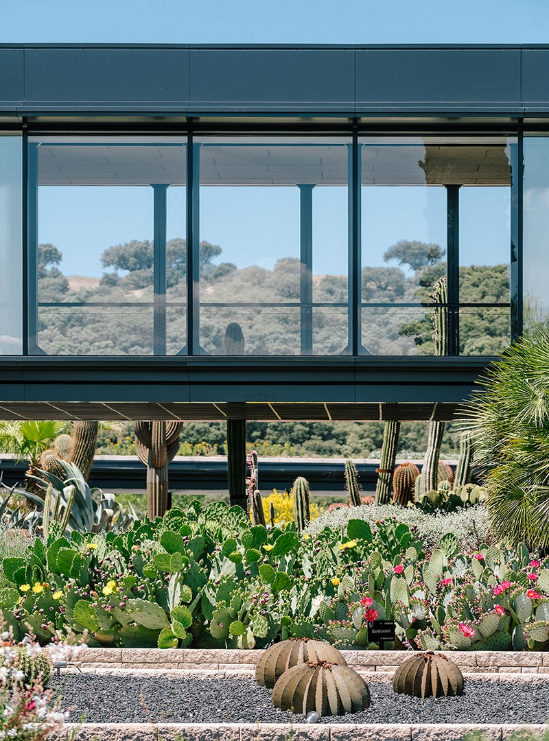 Desert city jardines cactus y xeropaisajismo en madrid for Donde venden cactus