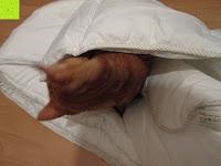 Katze in der Decke: Hygiene Steppbett 135x200cm Sanitized 100% Polyester Bettdecke Mikrofaser Weiß