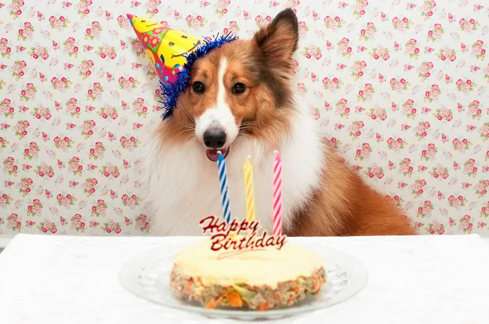 Happy Birthday Dog Smacks Cake