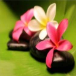 Flor entre pedras.