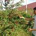 Estudantes cearenses espalham plantações de acerola em escolas de Pereiro-CE
