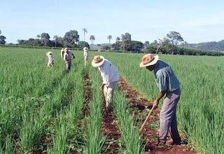 Com ajuda da ONU, governo cearense investe em agricultura familiar