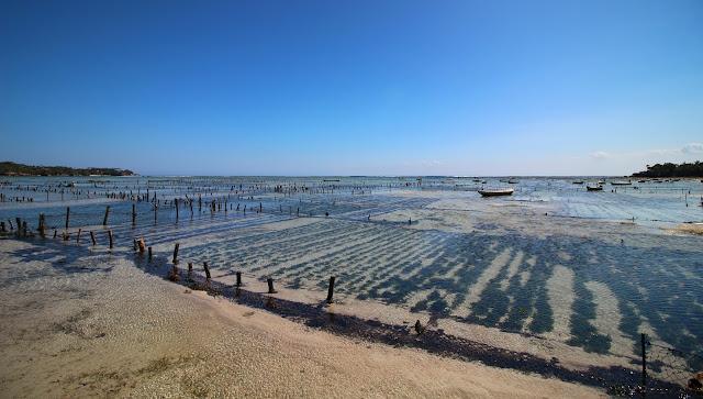 Culture d'algues à Nusa Lembongan