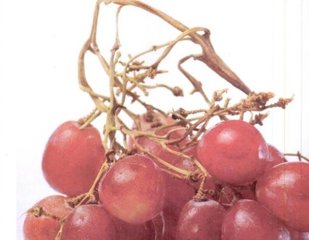 Manfaat Anggur Untuk Pengobatan dan Kesehatan Tubuh Anda...