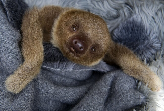 25 Thrilling Images That Made Our Day - A smiling sloth