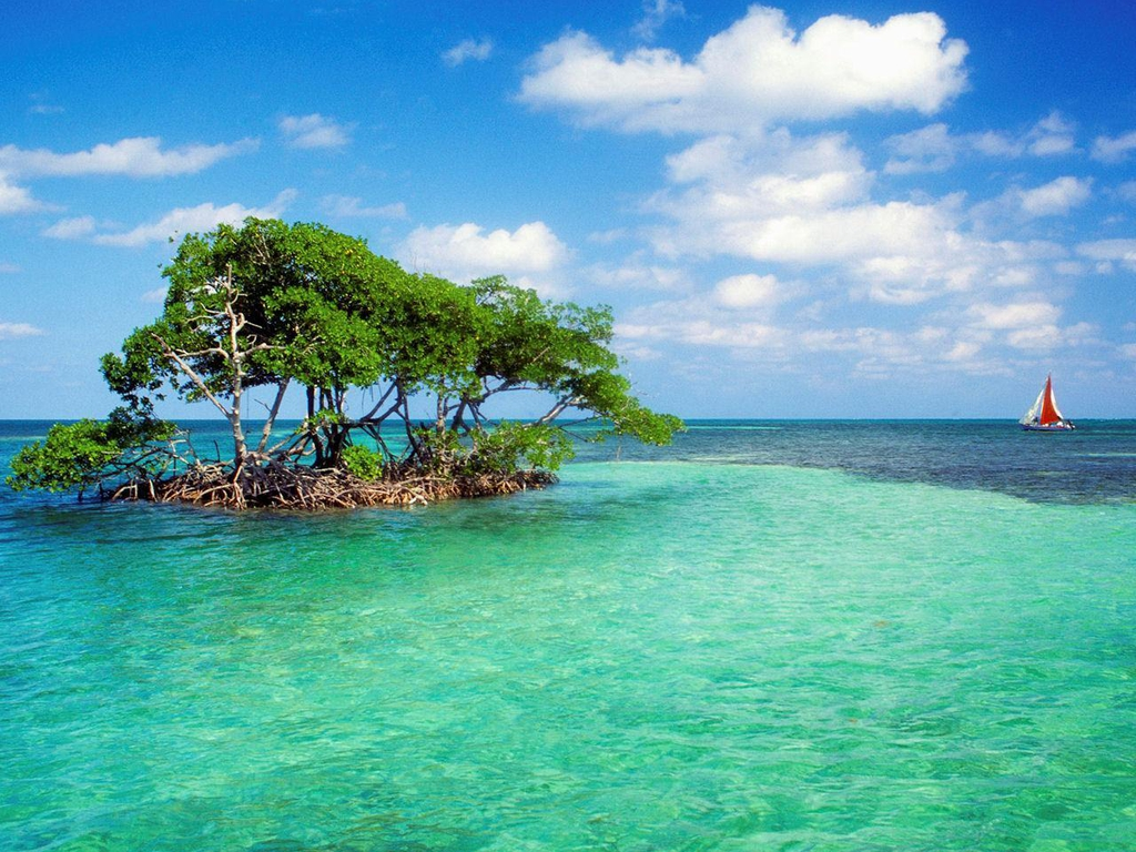 3d Tree Live Wallpaper Mangrove Tree Wallpapers Hd Wallpapers Wallpaper Free 3979