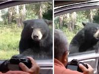 Mengerikan, Hendak di Foto Beruang Ini Buka Pintu Mobil