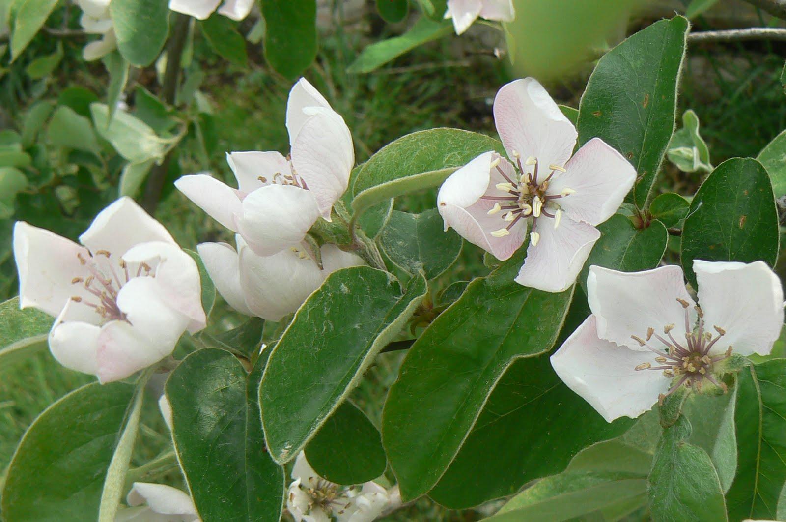 Les yeux, les pieds sur Gaïa: fleurs d'avril