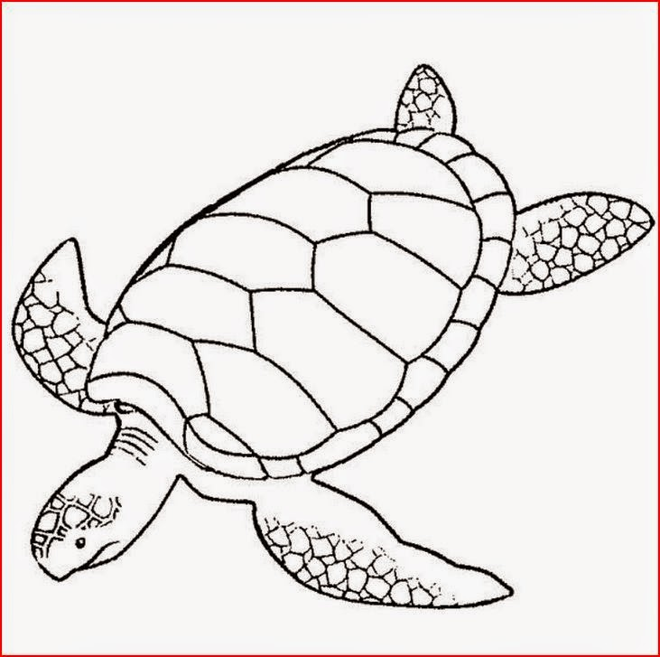 Versatile image with regard to printable turtle