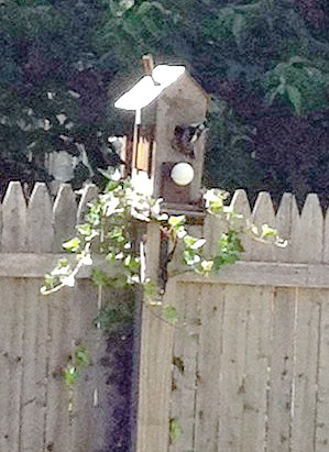 woodpecker moving into the birdhouse
