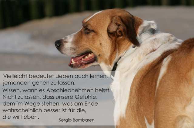 Warum Eigentlich Keine Beerdigung Fur Einen Hund About Dogs