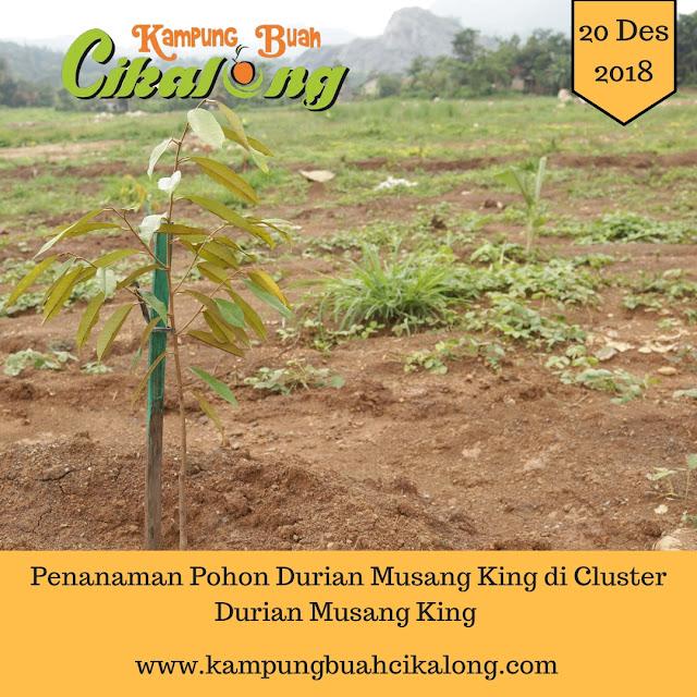 properti syariah cluster durian musang king kampung buah cikalong