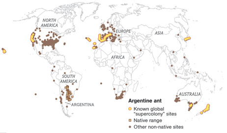 Hormigas argentinas Supercolonias