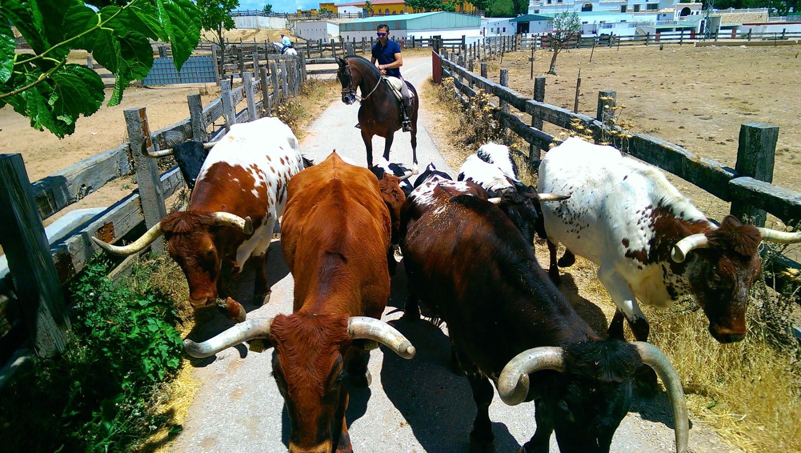 ganadería nazario ibáñez