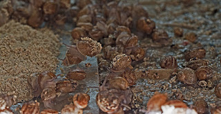 photo1- jeunes escargots en cours d'alimentation