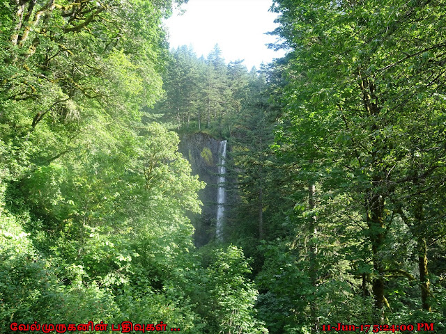 Water Falls in Columbia River Gorge