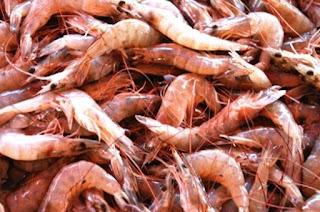 Makanan Ikan Oscar agar Cepat Besar